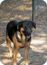 German Shepherd Dog Mix Dog for adoption in Quinlan, Texas - Hawk