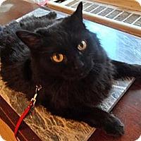 Adopt A Pet :: Busya - New York, NY