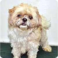 Adopt A Pet :: Beetle - Port Washington, NY