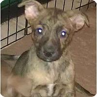 Adopt A Pet :: Bethany - Phoenix, AZ