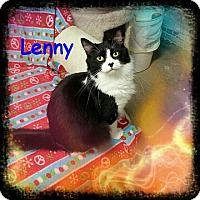 Domestic Mediumhair Cat for adoption in New Richmond,, Wisconsin - Lenny