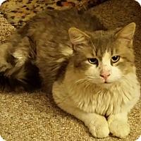 Adopt A Pet :: Bruno - brewerton, NY