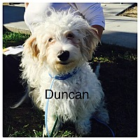 Adopt A Pet :: Duncan - West LA, CA
