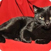 Adopt A Pet :: Ferdinand - Garland, TX