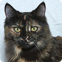 Adopt A Pet :: Joanie M - Sacramento, CA