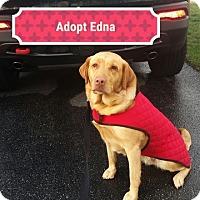 Adopt A Pet :: Edna - Hanover, PA