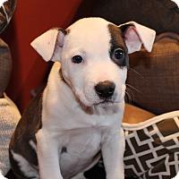 Adopt A Pet :: Spats - Los Angeles, CA