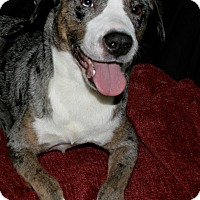 Adopt A Pet :: Hope - Lufkin, TX