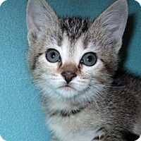 Adopt A Pet :: 16-c03-010 Raja - Fayetteville, TN