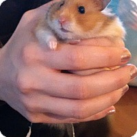 Adopt A Pet :: Cher - Bensalem, PA