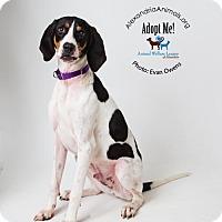 Adopt A Pet :: Stumbo - Alexandria, VA