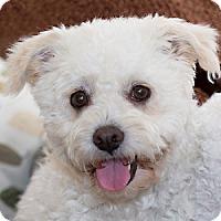 Adopt A Pet :: Daisy - La Costa, CA