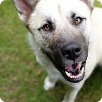 Adopt A Pet :: Ruffles - Santa Monica, CA