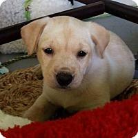 Adopt A Pet :: Summer - Hillside, IL