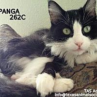 Adopt A Pet :: Topanga - Spring, TX