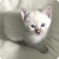 Adopt A Pet :: Bruno - River Edge, NJ