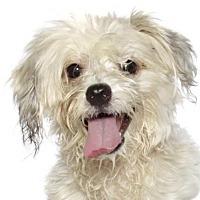 Adopt A Pet :: Poncho - Oakland Park, FL