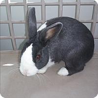 Adopt A Pet :: bunny - Olivet, MI