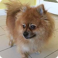 Adopt A Pet :: Biuty - Philadelphia, PA