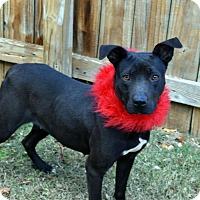 Adopt A Pet :: Avery - Darlington, SC