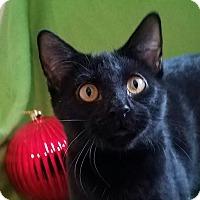 Adopt A Pet :: Reggie - Colfax, IA