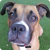 Adopt A Pet :: Nina - Tucson, AZ