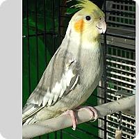 Adopt A Pet :: Goodwill - East Hartland, CT