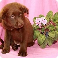 Adopt A Pet :: Hershey - Newark, NJ