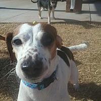 Adopt A Pet :: Mia - Edmond, OK