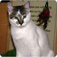 Adopt A Pet :: Skeeter - Irvine, CA