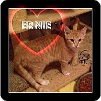 Adopt A Pet :: Ernie - Mobile, AL