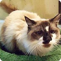 Adopt A Pet :: Princess Elsa - Ennis, TX