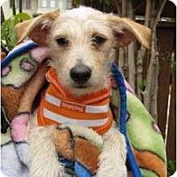 Adopt A Pet :: SPARKY - san diego, CA