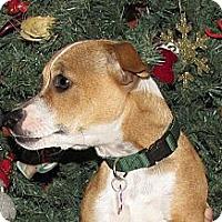 Adopt A Pet :: POPPEE - Phoenix, AZ