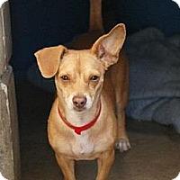 Adopt A Pet :: Tia - Vancouver, BC