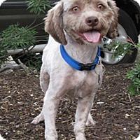 Adopt A Pet :: Angus - Austin, TX