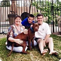 Adopt A Pet :: Comet - Sacramento, CA