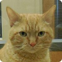 Adopt A Pet :: Elvis - Wickenburg, AZ