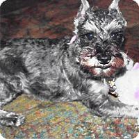 Adopt A Pet :: Jasmine - Sharonville, OH