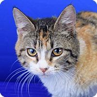 Adopt A Pet :: Pru - Carencro, LA
