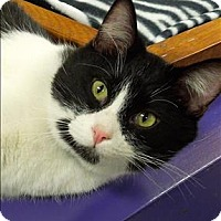 Adopt A Pet :: Bogey - Sherwood, OR