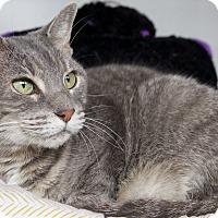 Adopt A Pet :: Janet - St Louis, MO