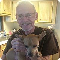Adopt A Pet :: Mogley - Phoenix, AZ