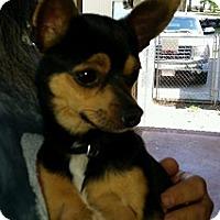 Adopt A Pet :: LB - Irmo, SC