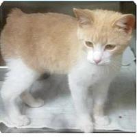 Adopt A Pet :: Oliver - Springdale, AR
