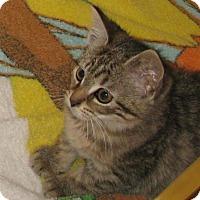 Adopt A Pet :: Melitta - Bedford, VA