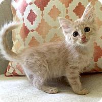 Adopt A Pet :: Tilt A Whirl - Addison, IL