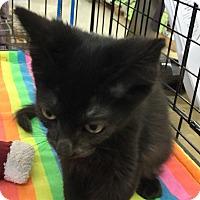 Adopt A Pet :: Piper - Gilbert, AZ