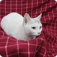 Adopt A Pet :: MOMA - Danville, IL