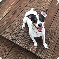 Adopt A Pet :: Bonnie (& Baby Girl) - Arlington, VA